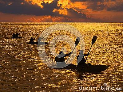 Silhouette of people rowing in kayaks