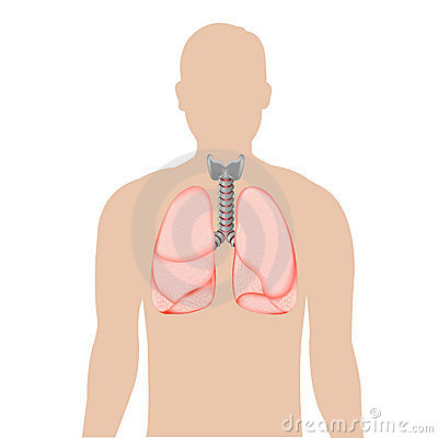 Silhouette Of Person With Lungs