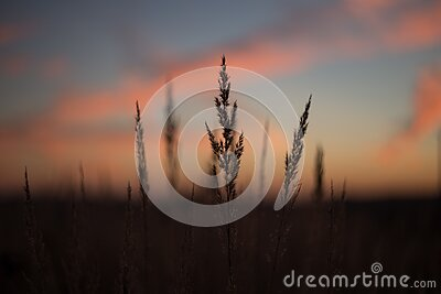 Silhouette Of Plant During Golden Time Free Public Domain Cc0 Image