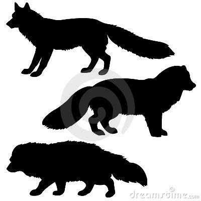 Silhouette polar fox, badger