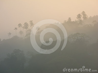 Silhouette of a rainforest