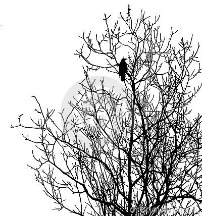 Silhouette ravens on tree