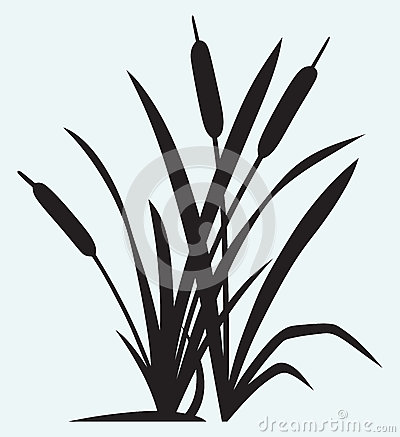 Free Silhouette Reed Royalty Free Stock Photo - 37859015
