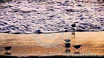 Silhouette of Shoreline Birds