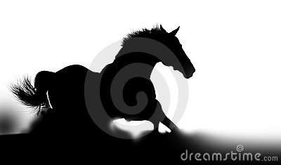 Silhouette of a stallion in dust