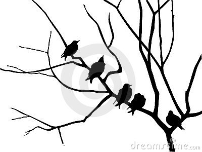 Silhouette starling
