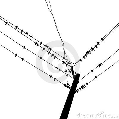 Silhouette swallow
