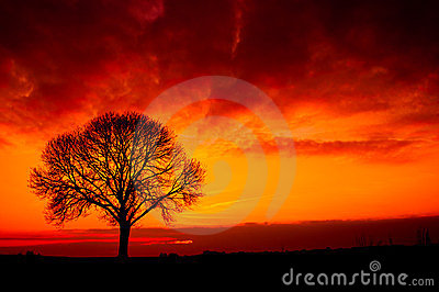 Silhouette from a tree