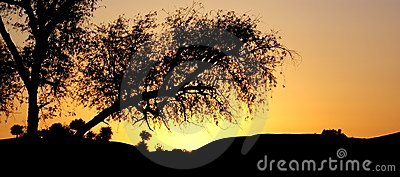 Silhouette tree in desert
