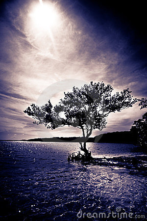 Silhouette of a tree with ocean view