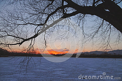 The silhouette of tree in winter