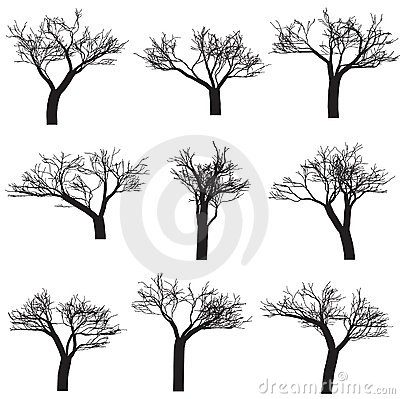 Free Silhouette Trees Stock Photography - 6877132