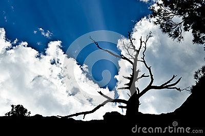 Silhouette of withered tree in the background sky