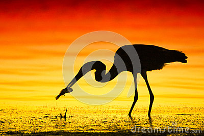 Silhouetted bird with fish
