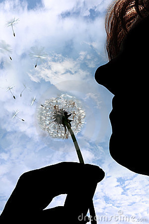 Silhouetted dandelion being gently blown by woman