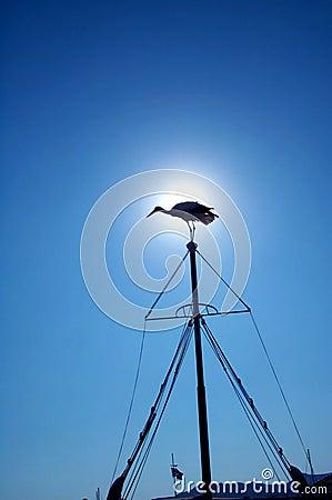 Silhouetted fågelmast