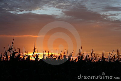Silhouetted field at sunset