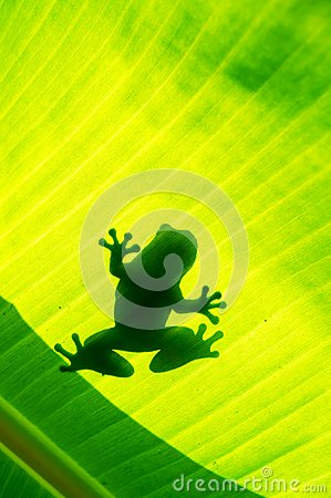 Silhouetted of frog