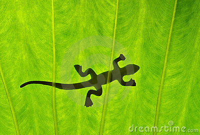 Silhouetted gecko