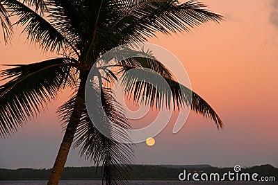 Silhouetted palm tree with the moon, Ofu island, Tonga