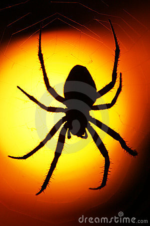Silhouetted spider at sunset