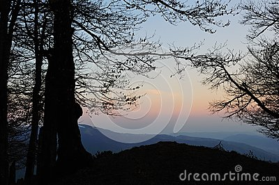 Silhouetted tree in mountains