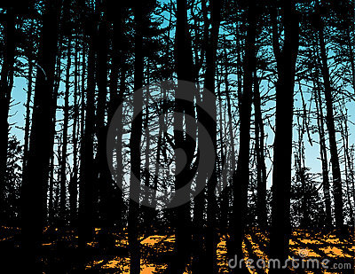 Silhouetted trees in forest