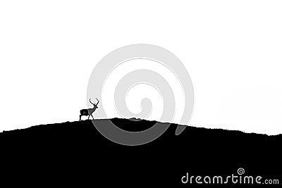 Silhouettefullvuxen hankronhjort