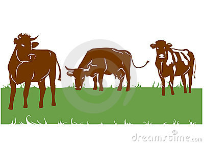 Silhouettes of the brown cows
