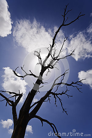 Burnt Bare Tree Branches Silhouettes