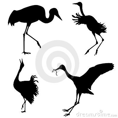 Silhouettes of the cranes