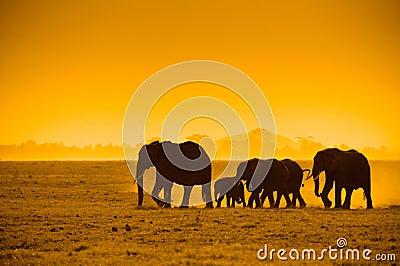 Silhouettes of elephants