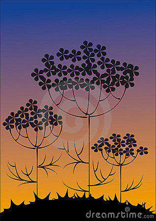 Silhouettes of flowers against the evening sky