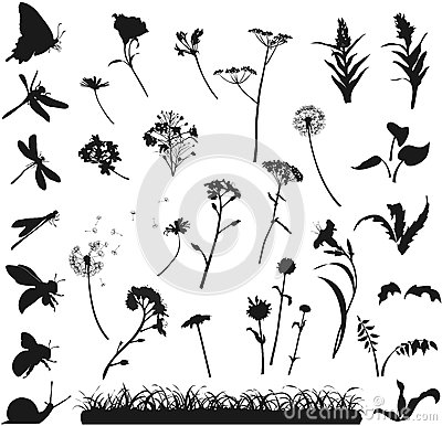 Silhouettes of flowers, grass and insects