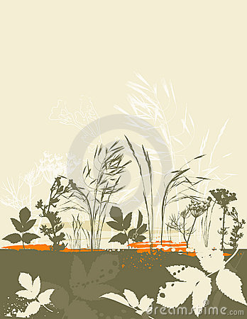 Silhouettes of grass, vector