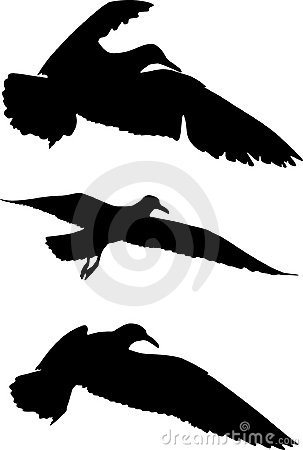 Free Silhouettes Of Birds Stock Images - 4641334