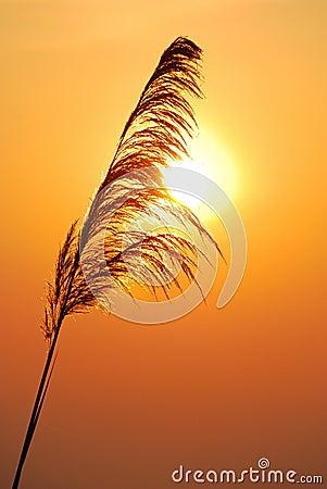 Free Silhouettes Of Grass Stock Photos - 19754063