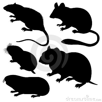 silhouettes rodent