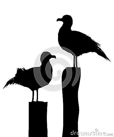 Sea gull silhouettes