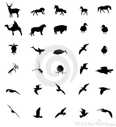 Silhouttes do animal dos animais selvagens
