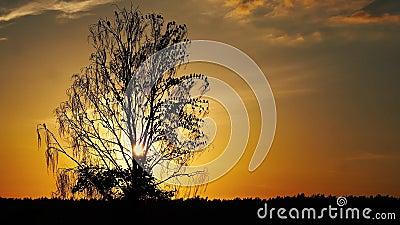 A silhueta de uma árvore fica sem folhas e há muitas aves nela vídeos de arquivo