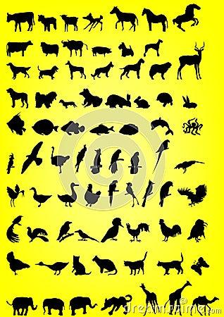 Silhuetas dos animais