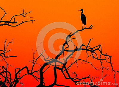 A silhuette of a heron