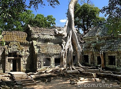 A silk-cotton tree consumes the ancient ruins of Ta Prohm, Angkor, Cambodia
