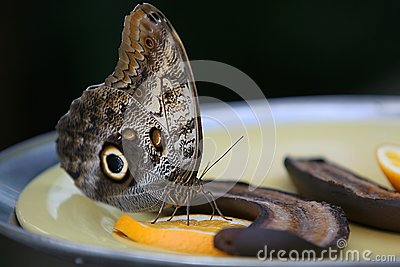 Silk Moth Stock Images - Image: 17641644