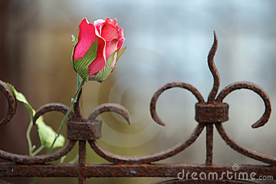 Silk rose on rusted fence