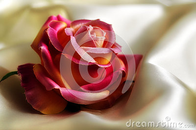 Silky rose