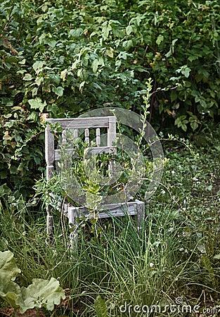 Silla de madera vieja en jardín salvaje