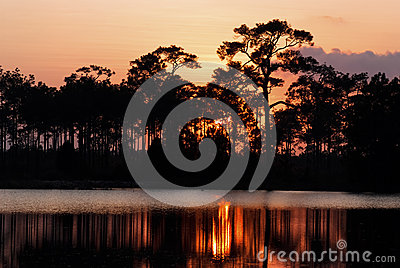 Sillouette of pine trees