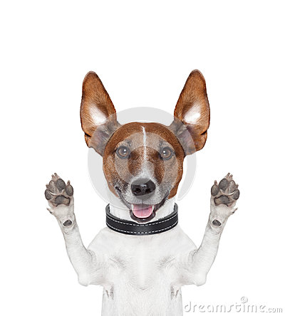 Free Silly Crazy Paws Up Dog Royalty Free Stock Photo - 27445875